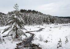 Χειμερινό τοπίο, δέντρα πεύκων που καλύπτονται στο χιόνι δίπλα σε έναν κολπίσκο, νότιο μέρος της Νορβηγίας στοκ φωτογραφία