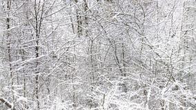 Χειμερινό τοπίο, κλάδοι με το χιόνι, οριζόντιο άνευ ραφής textur Στοκ Εικόνες