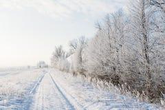 Χειμερινό τοπίο με έναν δρόμο και δέντρα σε έναν παγετό στοκ φωτογραφία με δικαίωμα ελεύθερης χρήσης