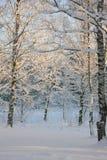 χειμερινό τοπίο με ένα χιονισμένο δάσος Στοκ Εικόνα