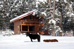 Χειμερινό τοπίο με τα άλογα Στοκ φωτογραφία με δικαίωμα ελεύθερης χρήσης