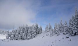 Χειμερινό τοπίο με τα δέντρα έλατου που καλύπτονται στο χιόνι Στοκ Εικόνες