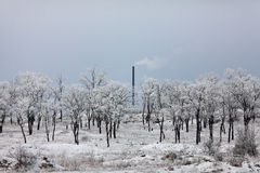 Χειμερινό τοπίο με τα δέντρα και το σωλήνα Στοκ φωτογραφία με δικαίωμα ελεύθερης χρήσης