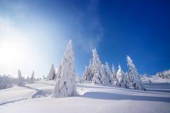 Χειμερινό τοπίο με τα δέντρα έλατου στο χιόνι στοκ εικόνα