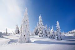Χειμερινό τοπίο με τα δέντρα έλατου στο χιόνι στοκ φωτογραφία με δικαίωμα ελεύθερης χρήσης