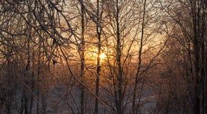 Χειμερινό τοπίο με τα δέντρα στοκ εικόνες