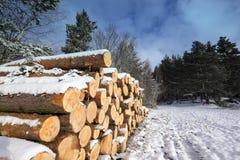 Χειμερινό τοπίο με τα κομμένα κούτσουρα που καλύπτονται από το χιόνι στοκ φωτογραφίες