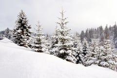 Χειμερινό τοπίο με τα κωνοφόρα Στοκ Φωτογραφίες