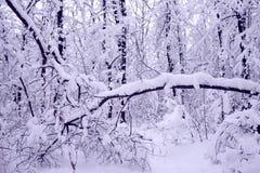 Χειμερινό τοπίο με τα μέρη του χιονιού Στοκ εικόνες με δικαίωμα ελεύθερης χρήσης