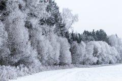 Χειμερινό τοπίο με τα παγωμένα δέντρα στον τομέα Στοκ Εικόνες