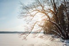 Χειμερινό τοπίο με τη λίμνη και το δάσος Στοκ φωτογραφίες με δικαίωμα ελεύθερης χρήσης