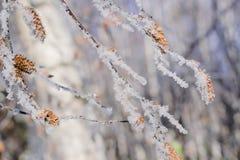 Χειμερινό τοπίο με τους κλαδίσκους των θάμνων στον παγετό Στοκ Εικόνες