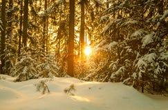 Χειμερινό τοπίο με το δάσος και το ηλιοβασίλεμα στοκ εικόνες με δικαίωμα ελεύθερης χρήσης