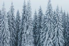 Χειμερινό τοπίο με το κομψό δάσος Στοκ Φωτογραφίες