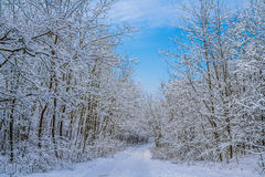 Χειμερινό τοπίο με το δρόμο και το δάσος στοκ εικόνες με δικαίωμα ελεύθερης χρήσης