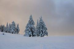 Χειμερινό τοπίο με το σύνολο δέντρων έλατου του χιονιού Στοκ εικόνες με δικαίωμα ελεύθερης χρήσης