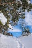 Χειμερινό τοπίο με το φρέσκο χιόνι σε ένα δάσος βουνών Στοκ Εικόνες