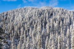 Χειμερινό τοπίο με το χιονώδες δάσος υψηλό στα βουνά σε μια ηλιόλουστη ημέρα στοκ εικόνα με δικαίωμα ελεύθερης χρήσης
