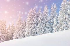 Χειμερινό τοπίο με το χιόνι και τα δέντρα Στοκ Εικόνες