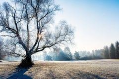 Χειμερινό τοπίο μια κρύα ηλιόλουστη ημέρα στοκ φωτογραφία με δικαίωμα ελεύθερης χρήσης