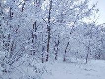 Χειμερινό τοπίο νεράιδων Στοκ Εικόνα
