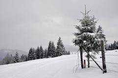 Χειμερινό τοπίο νεράιδων με τα δέντρα έλατου Στοκ Εικόνες