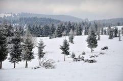 Χειμερινό τοπίο νεράιδων με τα δέντρα έλατου Στοκ φωτογραφίες με δικαίωμα ελεύθερης χρήσης