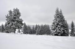 Χειμερινό τοπίο νεράιδων με τα δέντρα έλατου Στοκ εικόνα με δικαίωμα ελεύθερης χρήσης