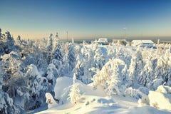 Χειμερινό τοπίο νεράιδων με τα χιονισμένα δέντρα Στοκ εικόνα με δικαίωμα ελεύθερης χρήσης