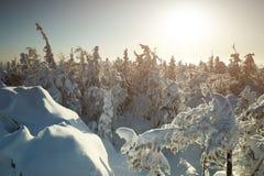 Χειμερινό τοπίο νεράιδων με τα χιονισμένα δέντρα Στοκ Εικόνες