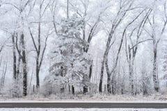 Χειμερινό τοπίο, παγωμένα δέντρα Στοκ Φωτογραφία