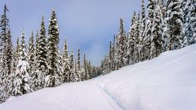 Χειμερινό τοπίο στα βουνά με τα χιονισμένα δέντρα Στοκ Εικόνες