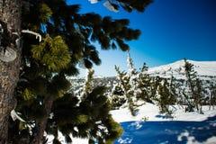 Χειμερινό τοπίο στα βουνά Στοκ Εικόνες
