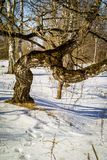 Χειμερινό τοπίο στη Ρωσία (περιοχή Kaluga) Στοκ Φωτογραφία