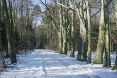 Χειμερινό τοπίο στο δάσος Στοκ φωτογραφία με δικαίωμα ελεύθερης χρήσης