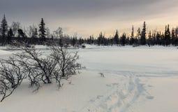 Χειμερινό τοπίο στο ρωσικό Lapland, χερσόνησος κόλα Στοκ Φωτογραφίες