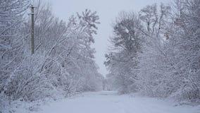 Χειμερινό τοπίο στο χιονισμένο πάρκο Άποψη των χιονισμένων δέντρων στη φύση φιλμ μικρού μήκους