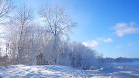 Χειμερινό τοπίο του δάσους στην άκρη ενός ποταμού στοκ φωτογραφίες