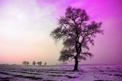 Χειμερινό τοπίο το πρωί, το χιόνι και το δέντρο με τον υπεριώδη τόνο Στοκ Φωτογραφία