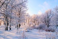 Χειμερινό τοπίο των παγωμένων δέντρων στο χειμερινό δάσος το χειμερινό πρωί Χειμερινό τοπίο με τα χιονώδη χειμερινά δέντρα Στοκ εικόνες με δικαίωμα ελεύθερης χρήσης