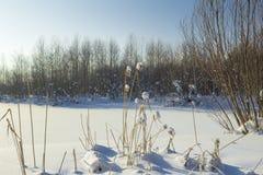 Χειμερινό τοπίο. Στοκ εικόνες με δικαίωμα ελεύθερης χρήσης