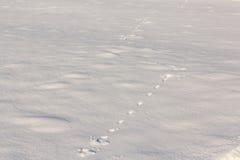 Χειμερινό υπόβαθρο με τα ίχνη Στοκ φωτογραφίες με δικαίωμα ελεύθερης χρήσης