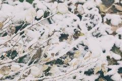 Χειμερινό υπόβαθρο με τα ξηρά χορτάρια και το annua lunaria Στοκ φωτογραφία με δικαίωμα ελεύθερης χρήσης