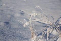 Χειμερινό υπόβαθρο με τον παγετό Στοκ Φωτογραφίες