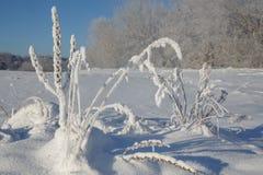 Χειμερινό υπόβαθρο με τον παγετό Στοκ εικόνα με δικαίωμα ελεύθερης χρήσης