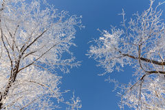 Χειμερινό υπόβαθρο με τον παγετό Στοκ Εικόνα