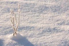 Χειμερινό υπόβαθρο με τον παγετό Στοκ φωτογραφία με δικαίωμα ελεύθερης χρήσης