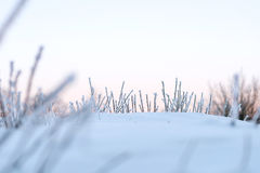 Χειμερινό υπόβαθρο της παγωμένης χλόης Στοκ φωτογραφία με δικαίωμα ελεύθερης χρήσης