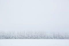 Χειμερινό υπόβαθρο, τοπίο Δέντρα στη χώρα των θαυμάτων Στοκ εικόνα με δικαίωμα ελεύθερης χρήσης