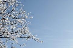 Χειμερινό φυσικό υπόβαθρο - το παγωμένο δέντρο διακλαδίζεται στο υπόβαθρο του ανοικτό μπλε ουρανού Στοκ Εικόνες